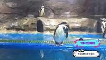 兄弟们,你们要的企鹅