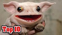 【科普】10种你绝逼不知道的物种!