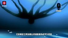 有研究称,如果地球表面一直被海水所覆盖:章鱼或成为智慧生命的