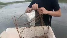池塘抓鱼乐趣多.你从没有见过的捕鱼技术.!