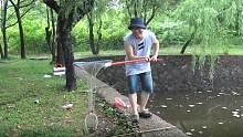 小伙在池塘用猪肺吊大龙虾,钓的不多但是个儿大