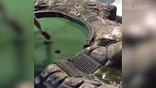 悲剧碉堡傻缺视频集锦245