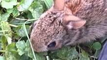 如何任性地勾引1只兔子???