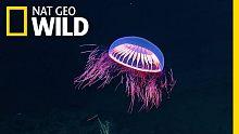 摄像头拍到一只长相奇异的海蜇水母,走近一看发现。。。