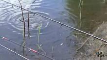 渔乐生活家钓鱼:这可真是纯野钓,各种鱼都不重样的上!