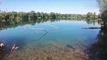 渔乐生活家钓鱼:大鲤鱼肆无忌惮到处跑,拿着鱼竿在后面跟着钓!