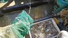 八爪鱼爆笼