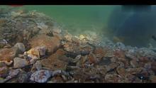 渔乐生活家水下拍摄:打窝后,大鲤鱼先是围着窝边吃饵料