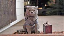 世界上最听话的猫