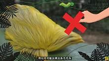 如果你看到这些生物,请立即逃离现场并求助!