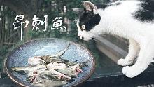 入江闪闪:买了6块钱的新鲜野生昂刺鱼加豆腐烧了一锅,也很下饭