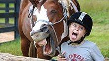 爆笑的动物系列