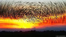 11大极其罕见又壮观的自然现象,没几个人敢说见过!