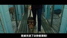 唐唐说电影:最奇妙的历险记 爆笑解说一条狗的回家路